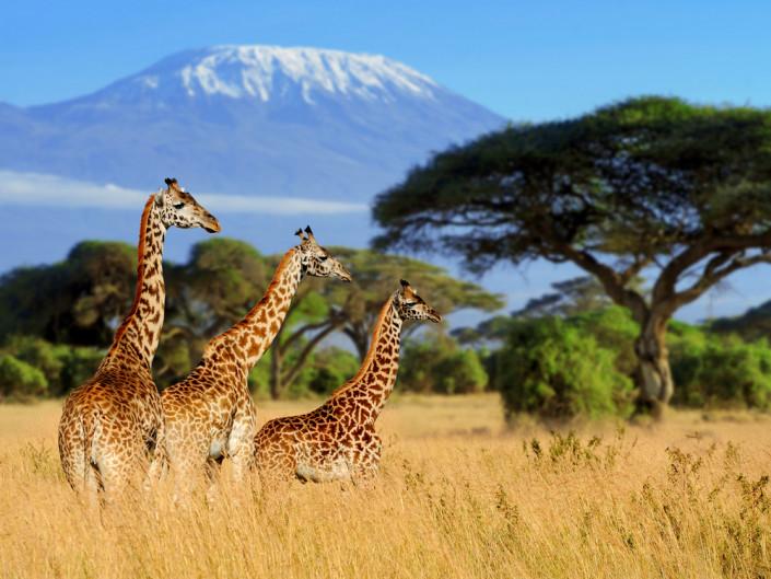 Не будьте похожим на зебру. Как подготовиться к сафари | Tengri Travel